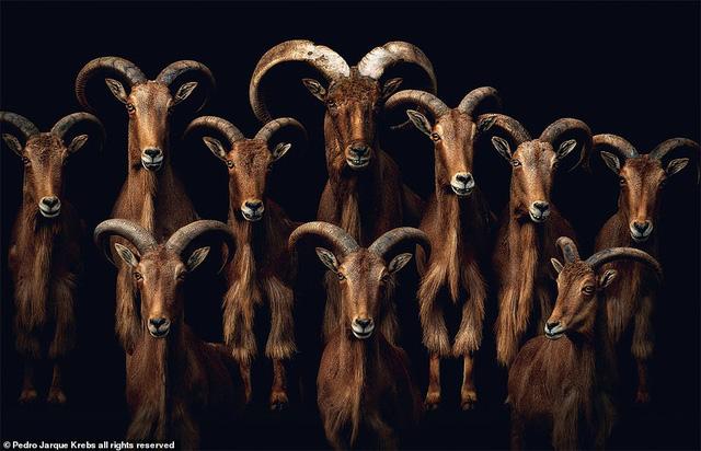 Những bức ảnh động vật hoang dã tạo dáng cực duyên - Ảnh 1.