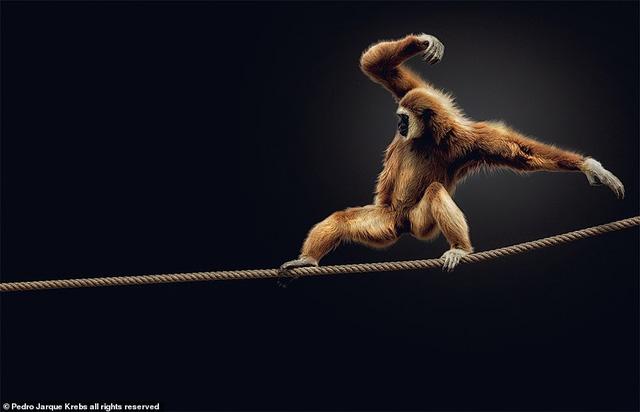Những bức ảnh động vật hoang dã tạo dáng cực duyên - Ảnh 5.