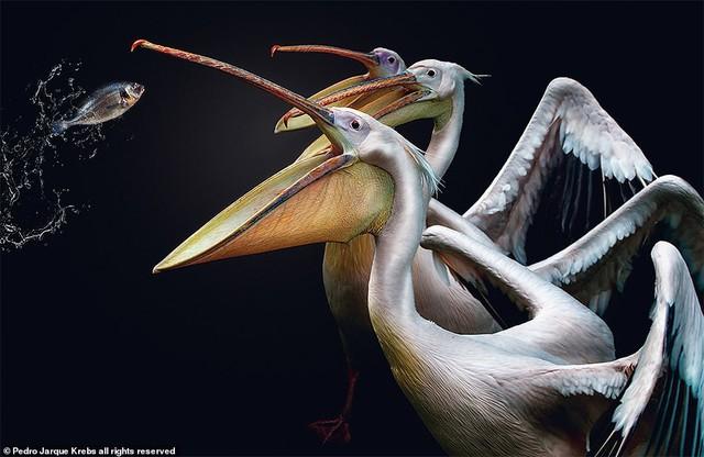 Những bức ảnh động vật hoang dã tạo dáng cực duyên - Ảnh 6.