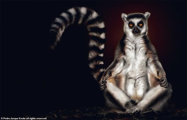 Những bức ảnh động vật hoang dã tạo dáng cực duyên - Ảnh 8.