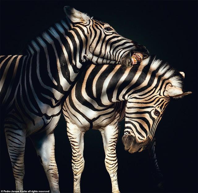 Những bức ảnh động vật hoang dã tạo dáng cực duyên - Ảnh 9.