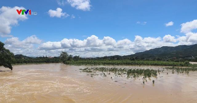 Lâm Đồng: Lũ lớn làm ngập hàng trăm ha cây trồng chìm trong biển nước - Ảnh 1.