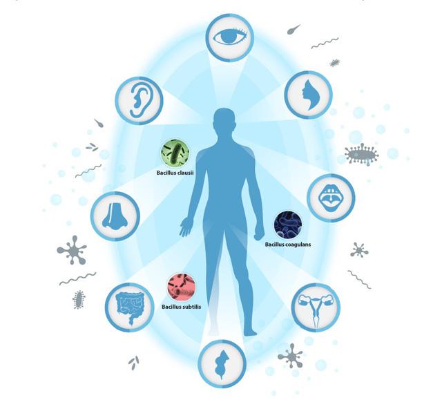 Giảm thiểu việc sử dụng kháng sinh bằng công nghệ bào tử lợi khuẩn - Ảnh 1.