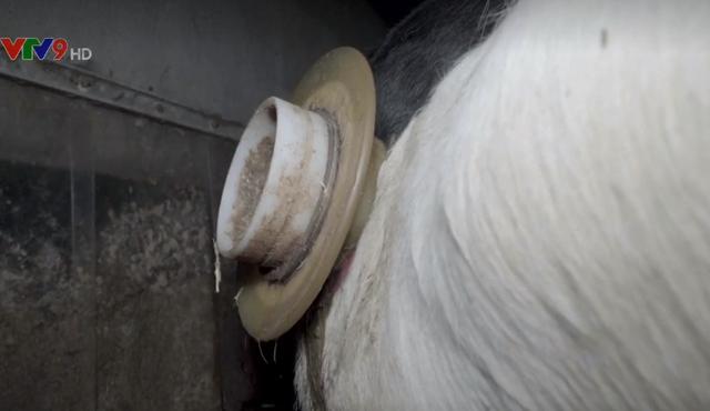 Video lên án ngược đãi động vật ở Pháp - Ảnh 1.