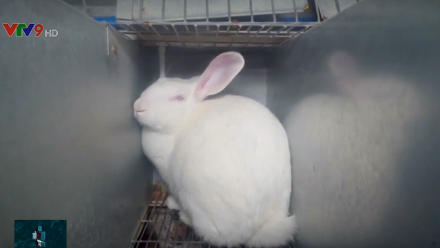 Video lên án ngược đãi động vật ở Pháp - Ảnh 6.