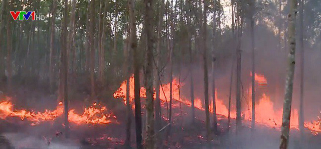 Cháy rừng tại Phú Yên - Ảnh 1.