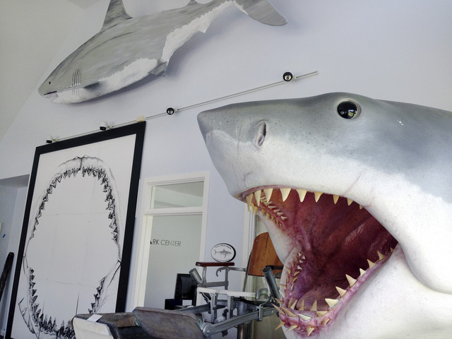 Báo động tình trạng đánh bắt cá mập tại Đại Tây Dương - Ảnh 1.