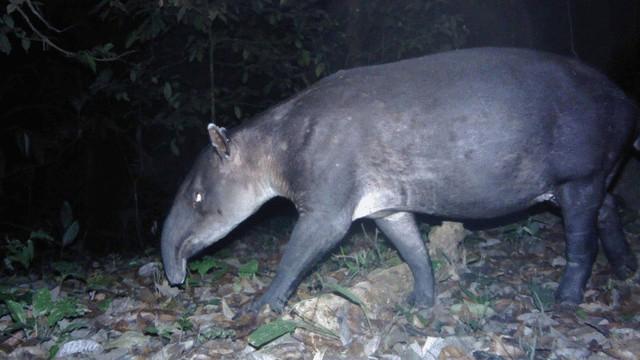"""Sinh vật đã tuyệt chủng bất ngờ xuất hiện ở """"thành phố của Thần Khỉ"""" tại Honduras - Ảnh 3."""
