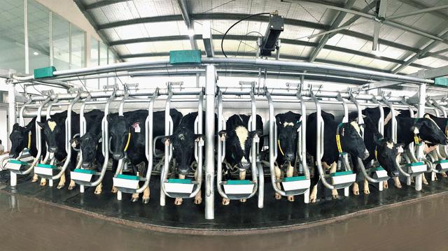 Vinamilk và những bước đi chiến lược trong 30 năm phát triển ngành chăn nuôi bò sữa - Ảnh 5.
