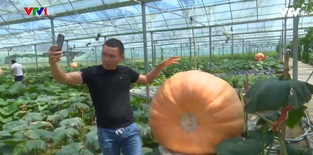 Choáng ngợp với bí ngô khổng lồ nặng 400kg - Ảnh 1.