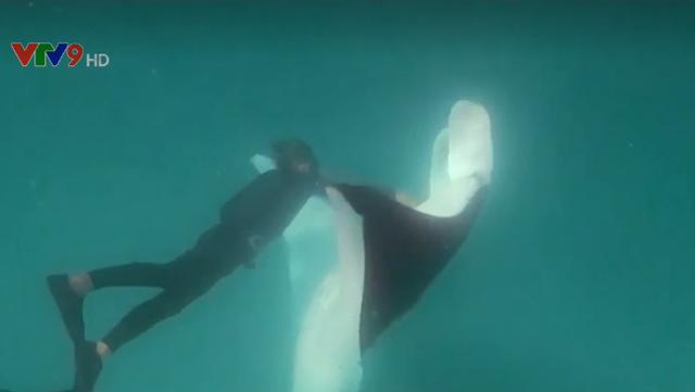 Cá đuối khổng lồ cầu cứu thợ lặn tại Australia - Ảnh 1.