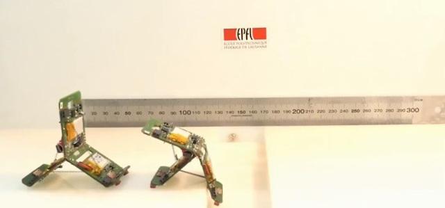Robot hoạt động giống loài kiến
