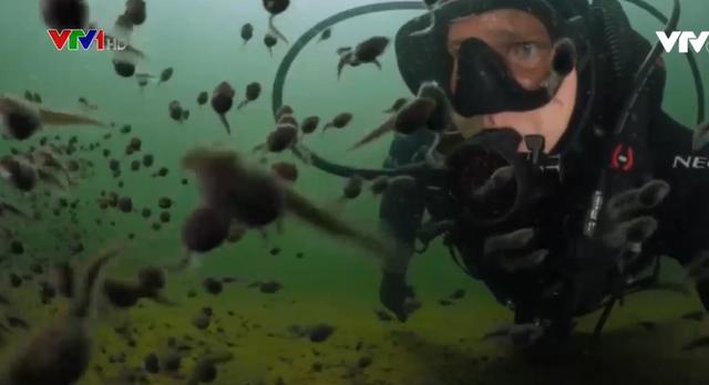 Thợ lặn bơi giữa hàng trăm con nòng nọc - Ảnh 1.