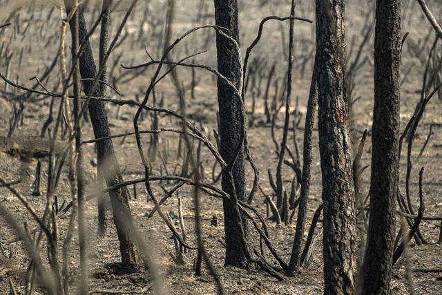 Bồ Đào Nha kiểm soát được cháy rừng - Ảnh 2.