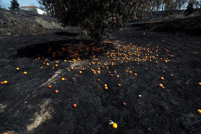 Bồ Đào Nha kiểm soát được cháy rừng - Ảnh 1.