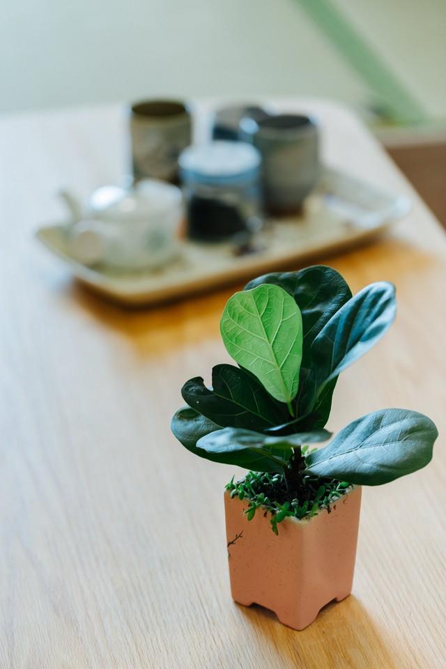 Không gian sống xanh và tối giản đáng mơ ước của một gia đình trẻ ở Hà Nội - Ảnh 12.