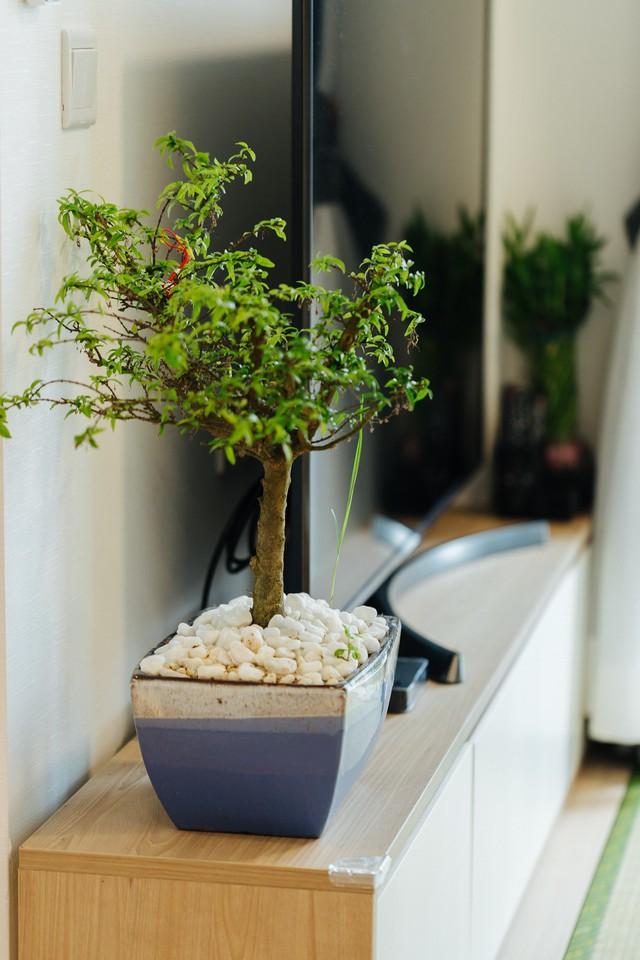 Không gian sống xanh và tối giản đáng mơ ước của một gia đình trẻ ở Hà Nội - Ảnh 11.