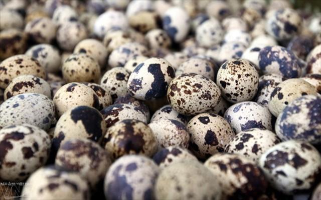 Trứng chim cút mang lại nhiều tác dụng cho sức khỏe - Ảnh 5.