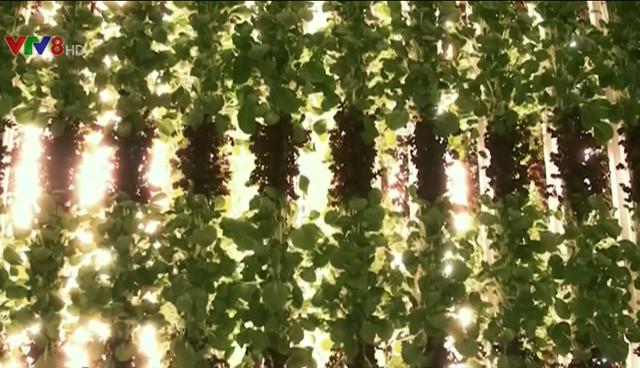 Trồng rau không cần ánh sáng mặt trời - Ảnh 2.