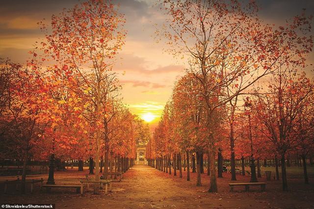 Lý giải vì sao Paris được mệnh danh là thành phố lãng mạn nhất thế giới - Ảnh 7.