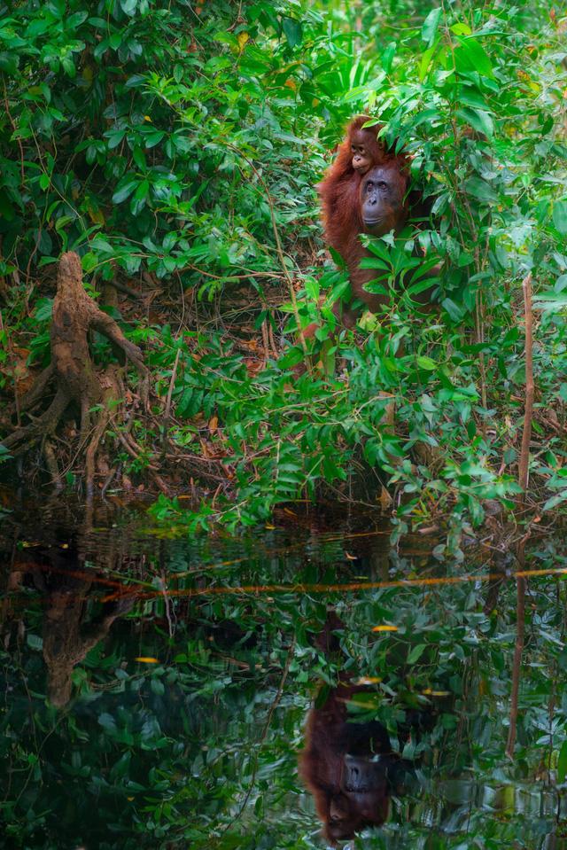 Những bức ảnh tuyệt đẹp của mẹ thiên nhiên trong cuộc thi ảnh Glanzlichter - Ảnh 8.