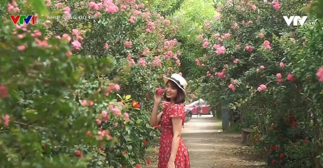 Con đường hoa tường vi đẹp như mơ ở Hà Nội - Ảnh 3.