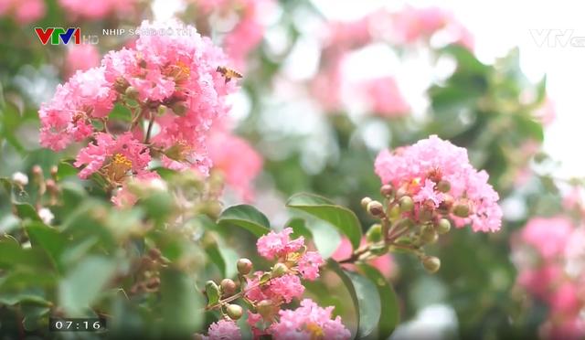 Con đường hoa tường vi đẹp như mơ ở Hà Nội - Ảnh 1.