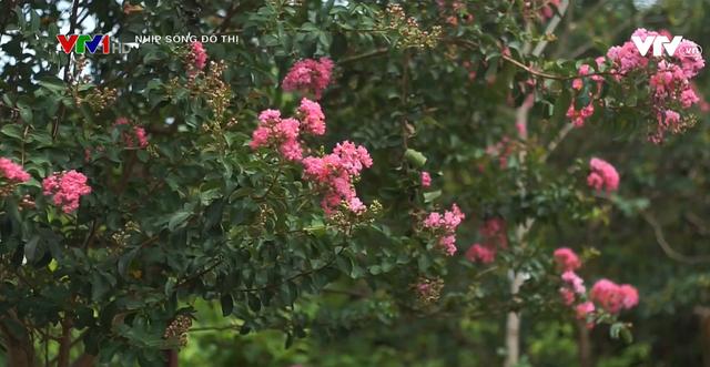 Con đường hoa tường vi đẹp như mơ ở Hà Nội - Ảnh 2.