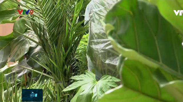 Khách sạn thực vật đầu tiên trên thế giới - Ảnh 2.