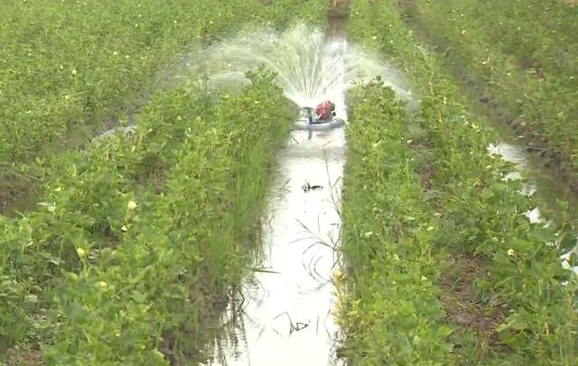 Máy tưới rẫy tự động của nông dân An Giang - Ảnh 1.