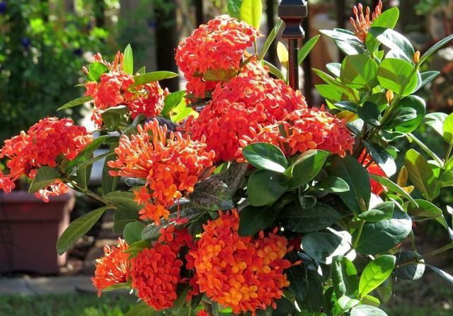 Những loài hoa mang may mắn và tài lộc trong ngày lễ Vu Lan - Ảnh 1.