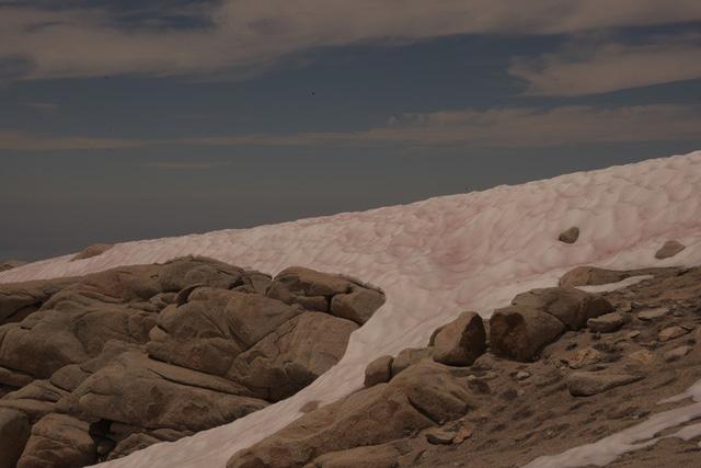 Kỳ lạ, hiện tượng tuyết biến thành màu đỏ - Ảnh 4.