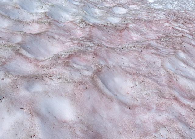 Kỳ lạ, hiện tượng tuyết biến thành màu đỏ - Ảnh 2.