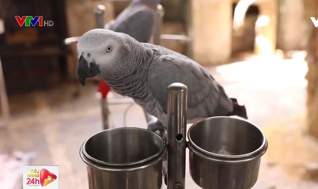 Bộ sưu tập chim vẹt hơn nửa tỷ đồng của chàng trai TP.HCM - Ảnh 1.