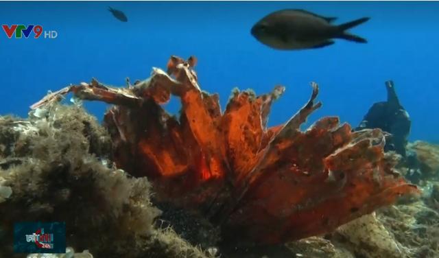 San hô... nylon dưới đáy biển - Ảnh 1.