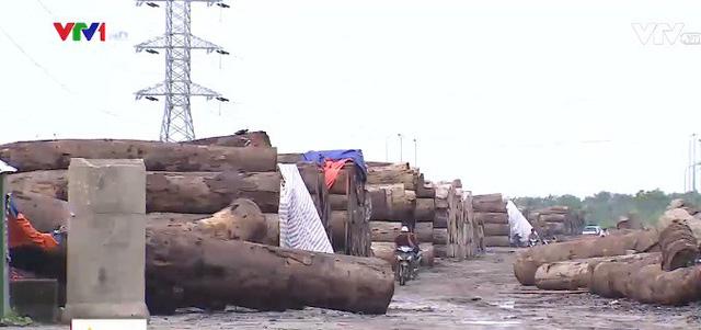Bất chấp lệnh cưỡng chế, bãi gỗ trái phép vẫn ngang nhiên tồn tại - Ảnh 1.