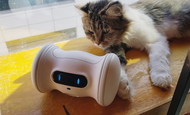 Robot Varram Pet Fitness chơi đùa với thú cưng - Ảnh 1.