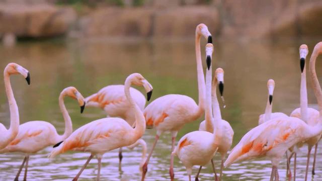 Chiêm ngưỡng các loài vật hoang dã tại vườn thú mở đầu tiên ở Nha Trang - Ảnh 2.