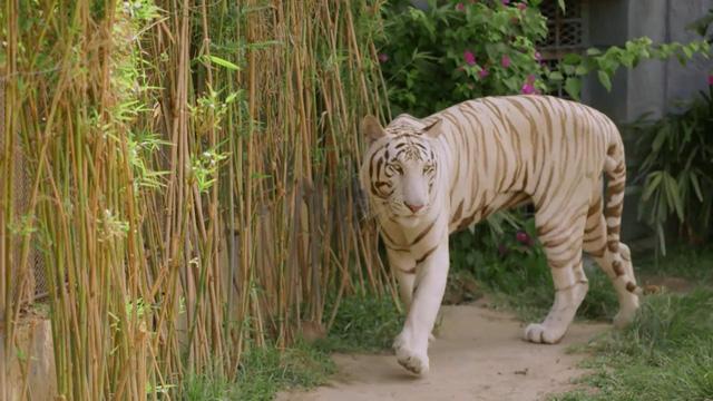 Chiêm ngưỡng các loài vật hoang dã tại vườn thú mở đầu tiên ở Nha Trang - Ảnh 4.
