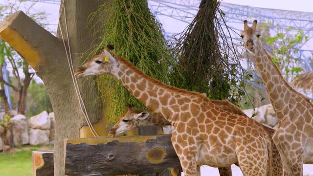 Chiêm ngưỡng các loài vật hoang dã tại vườn thú mở đầu tiên ở Nha Trang - Ảnh 6.