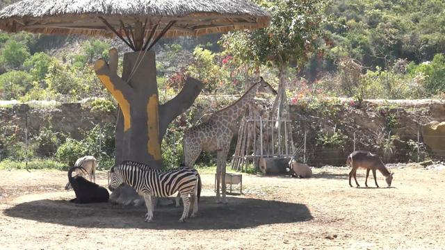 Chiêm ngưỡng các loài vật hoang dã tại vườn thú mở đầu tiên ở Nha Trang - Ảnh 5.