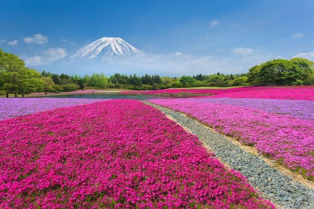 Mê mẩn vẻ đẹp của những cánh đồng hoa trên khắp thế giới - Ảnh 11.