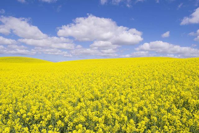 Mê mẩn vẻ đẹp của những cánh đồng hoa trên khắp thế giới - Ảnh 12.