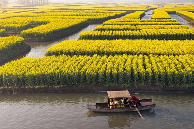 Mê mẩn vẻ đẹp của những cánh đồng hoa trên khắp thế giới - Ảnh 6.