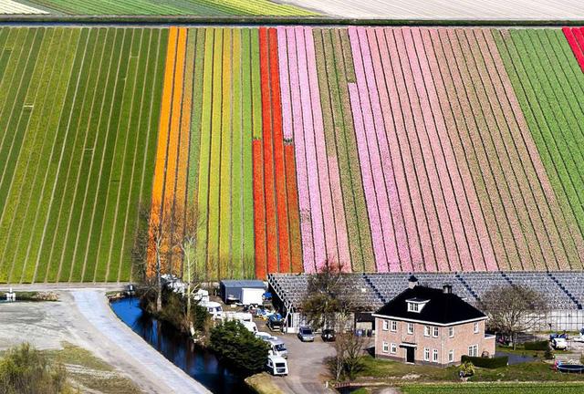 Mê mẩn vẻ đẹp của những cánh đồng hoa trên khắp thế giới - Ảnh 7.