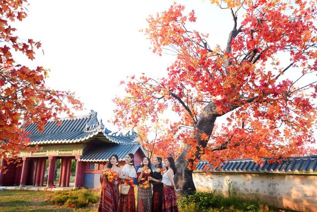 Ngắm hàng cây phong lá đỏ lãng mạn như trong phim Hàn tại Hà Nội - Ảnh 6.