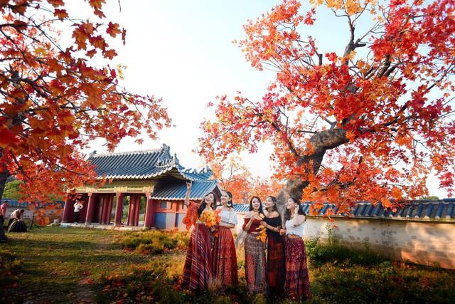 Ngắm hàng cây phong lá đỏ lãng mạn như trong phim Hàn tại Hà Nội - Ảnh 2.