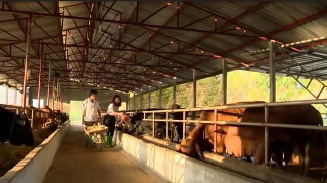 Chuyến đi màu xanh: Cùng ca sĩ Ngọc Khuê khám phá trang trại bò 3B - Ảnh 1.