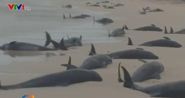 Cá voi chết hàng loạt tại bãi biển Cape Verde - Ảnh 1.