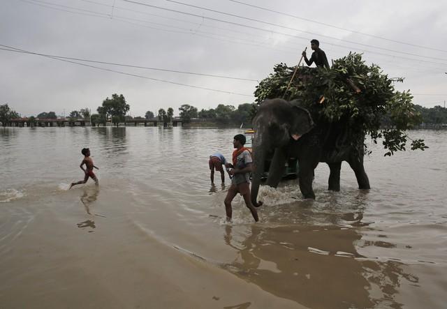 Lũ lụt nghiêm trọng tại Ấn Độ, ít nhất 44 người thiệt mạng - Ảnh 5.